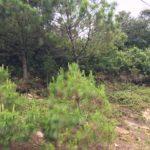 Terreno en Terravista, Fraijanes, Carretera a El Salvador