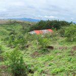 Granja en Santa Elena Barrillas