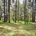 Terreno en El Encinal, zona 7 de Mixco