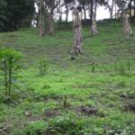 Terreno en Arrazola, Km 16 Carretera a El Salvador